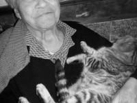 Un gatto coccolone